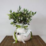 Bomboniera bonsai olivo